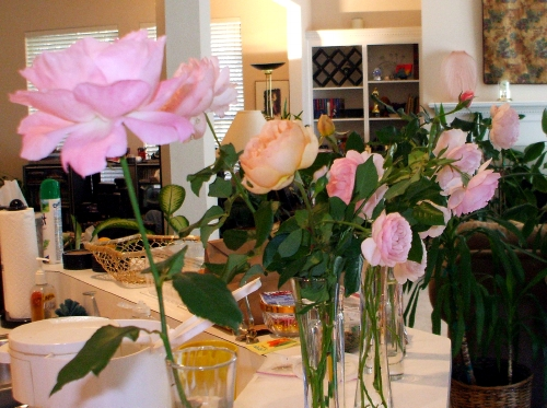 Antique roses on the kitchen counter, filling the whole house with their rose-y citrus-y fragrance
